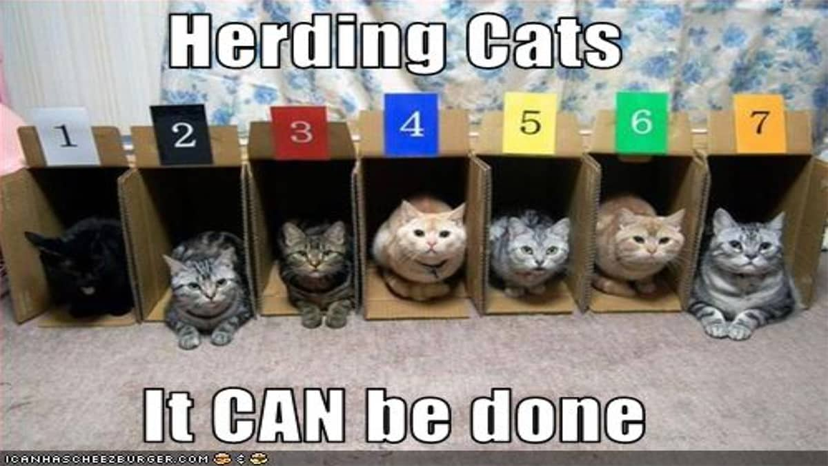 Zoom is like herding cats